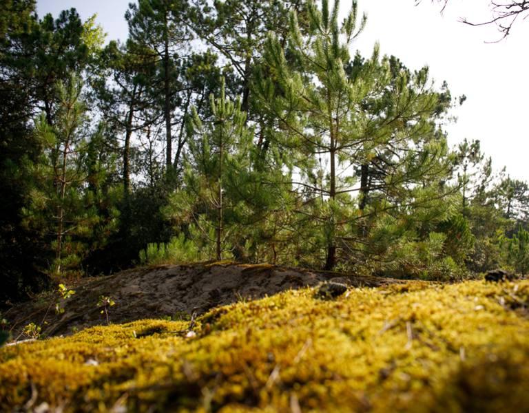 Forêt, Les Portes-en-Ré
