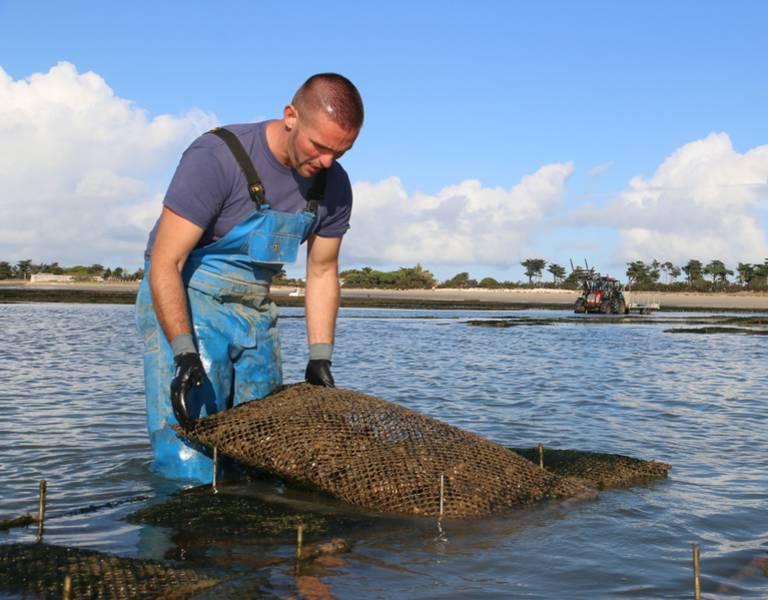 Huîtres de l'Ile de Ré