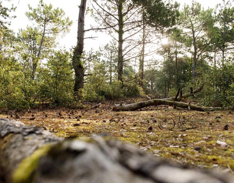 Balade en forêts