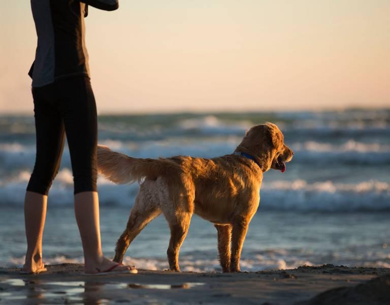 Les chiens sur les plages, (c) pexels