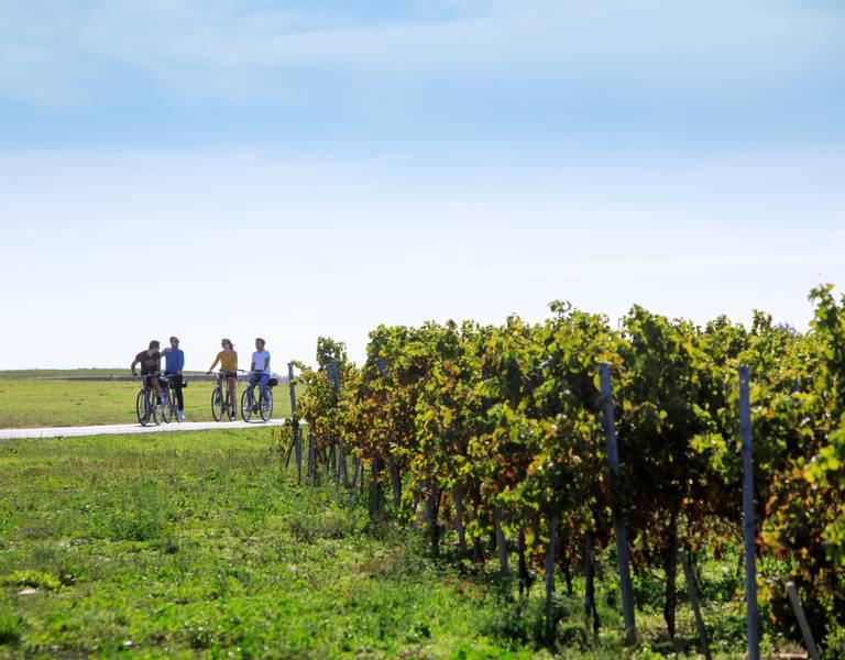 Vélo dans les vignes (c) Mathieu Genon