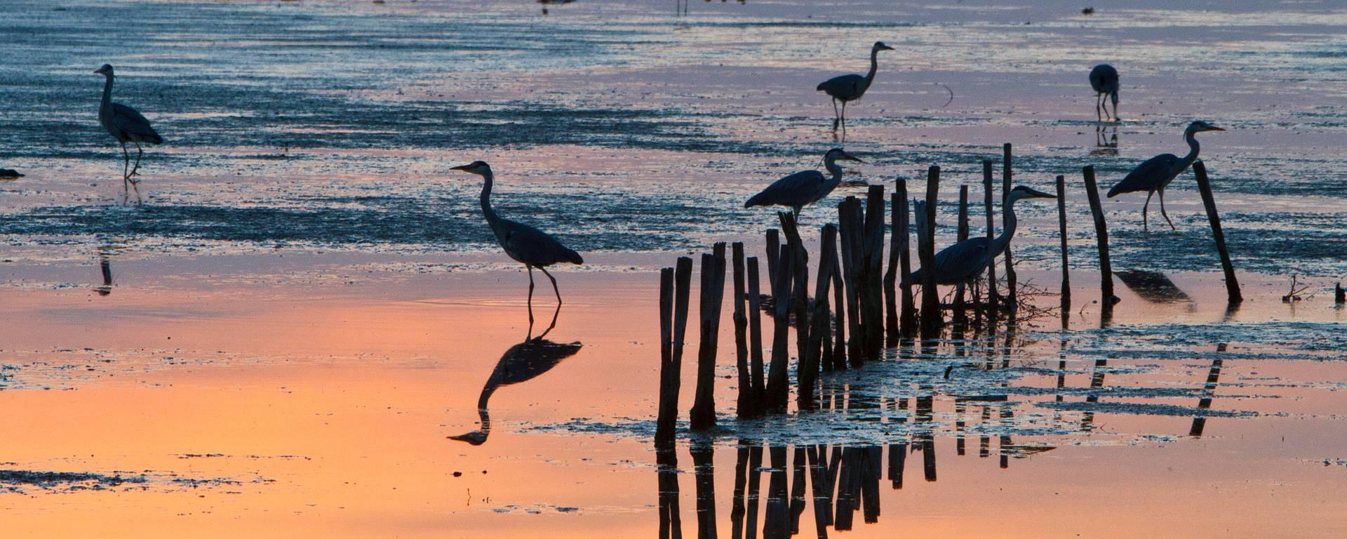 Oiseaux aux Portes-en-Ré par François Blanchard