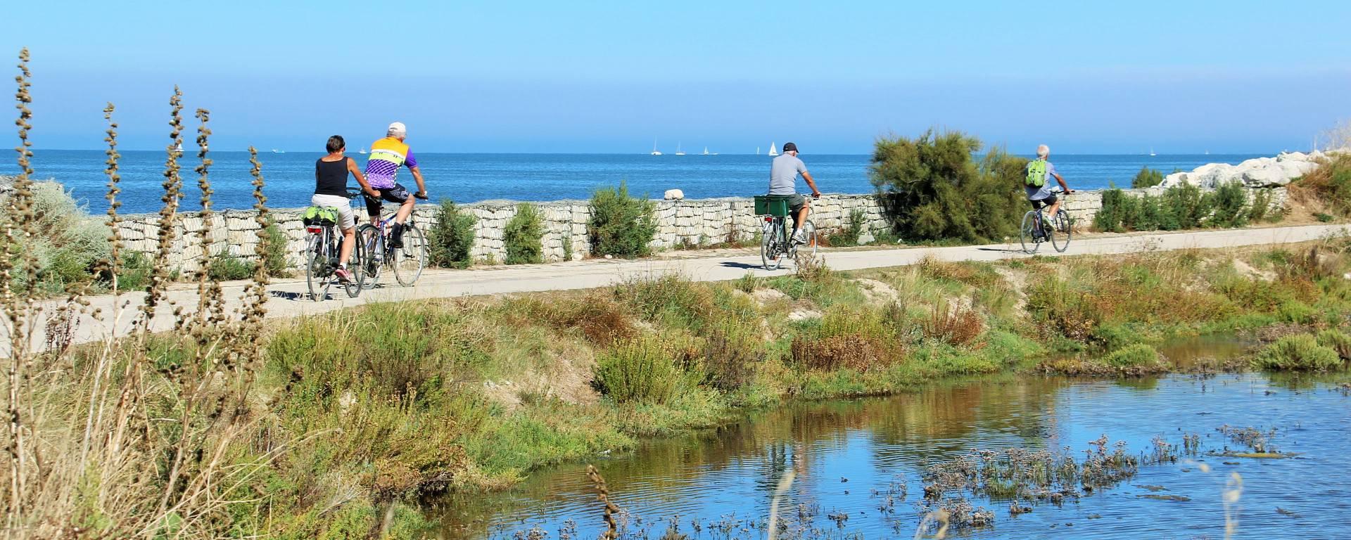 Les pistes cyclables à l'Île de Ré par Lesley Williamson