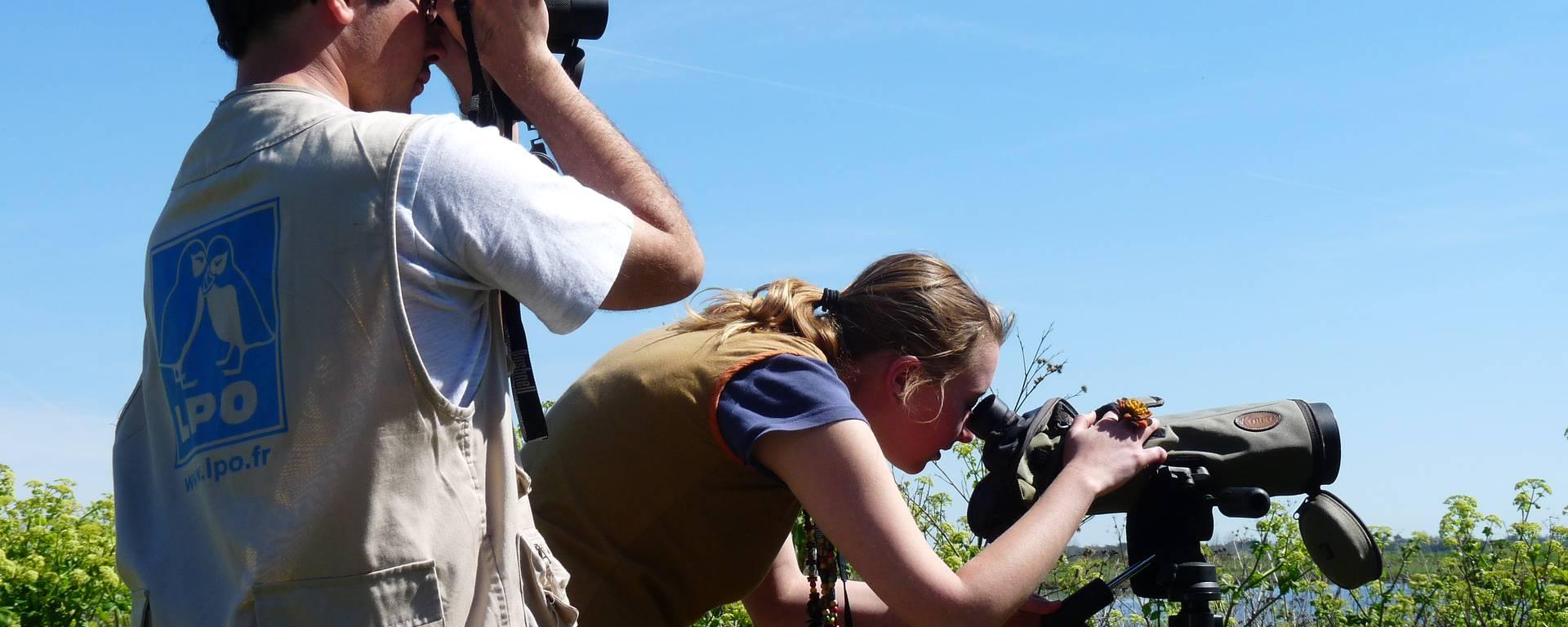 Observation des oiseaux ©SPL Destination Ile de Ré