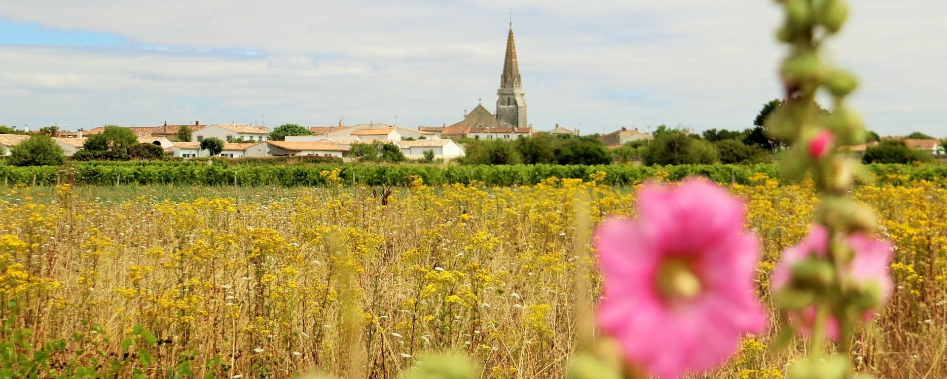Vue sur les vignes et l'église par Lesley Willialmson