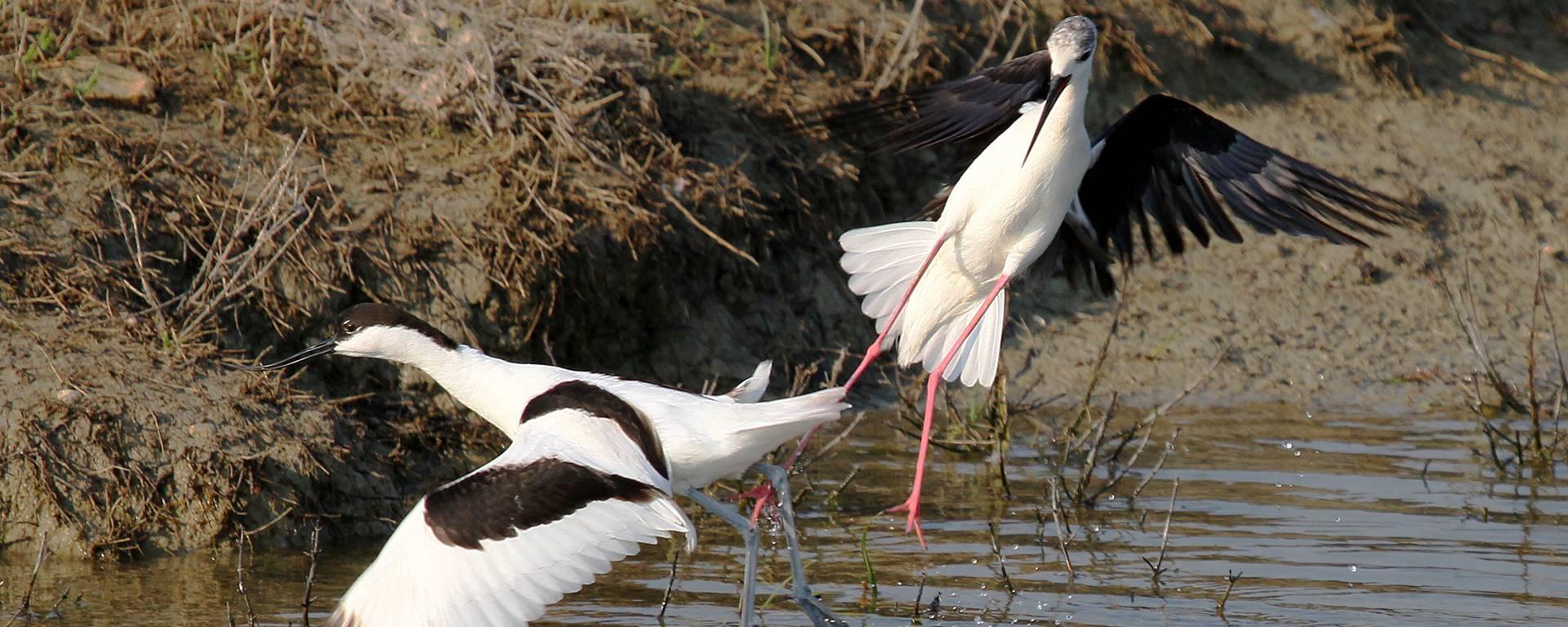 Oiseaux dans les marais ©François Blanchard