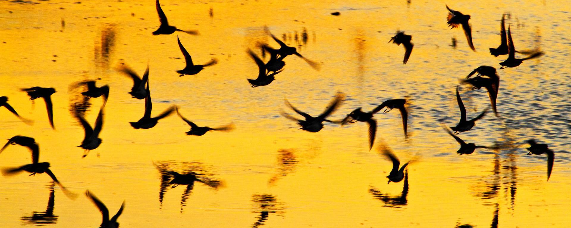Oiseaux s'envolent par François Blanchard