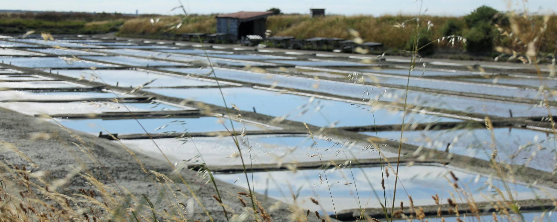 Les marais salants par Lesley Williamson