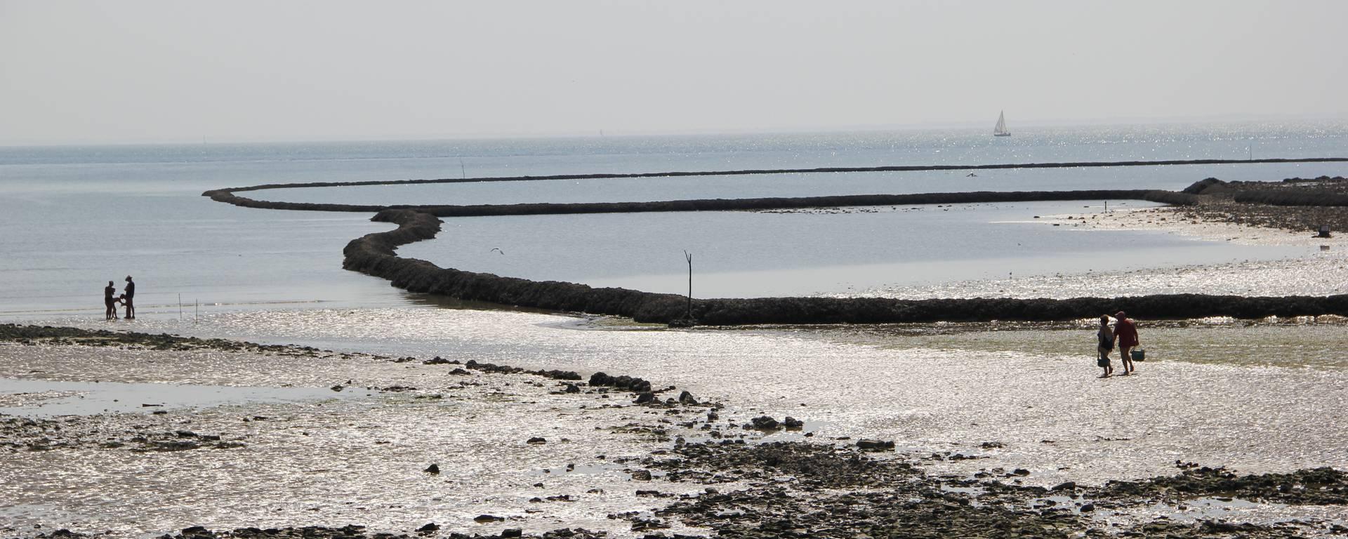 Les écluses à poissons de Sainte-Marie-de-Ré