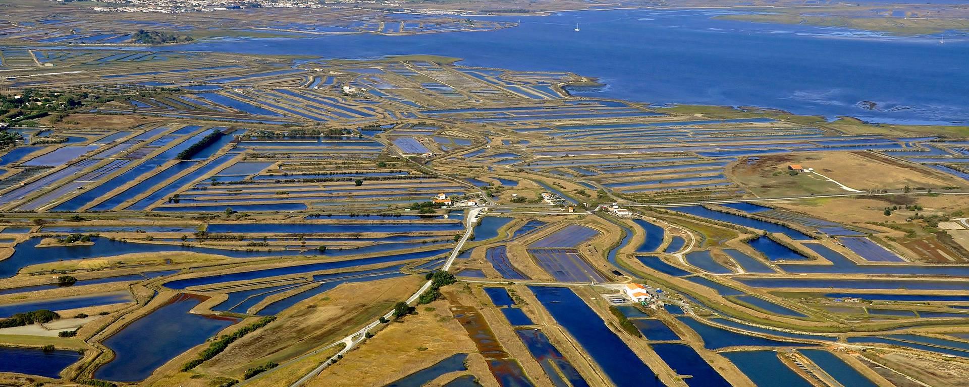 Les marais salants de l'Ile de Ré à perte de vue par Bernard Collin