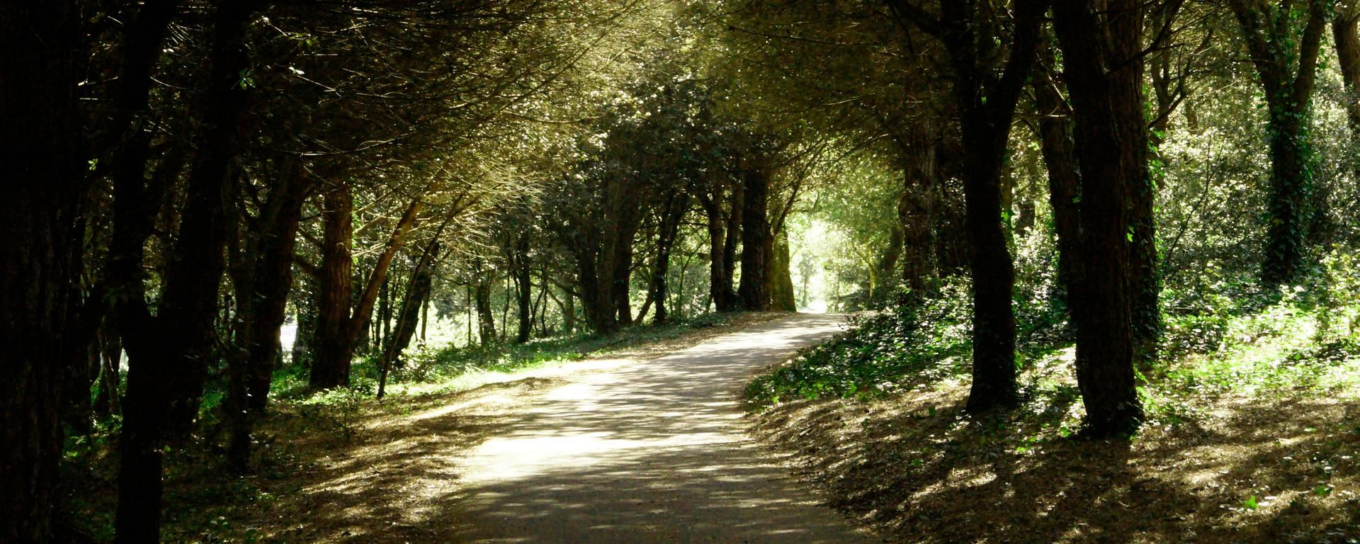 Forêt aux Portes en Ré par Pierre Galine