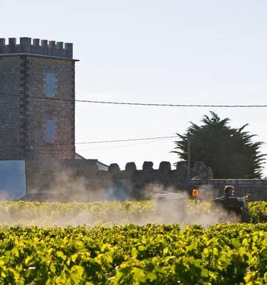 Travail dans les vignes par François Blanchard
