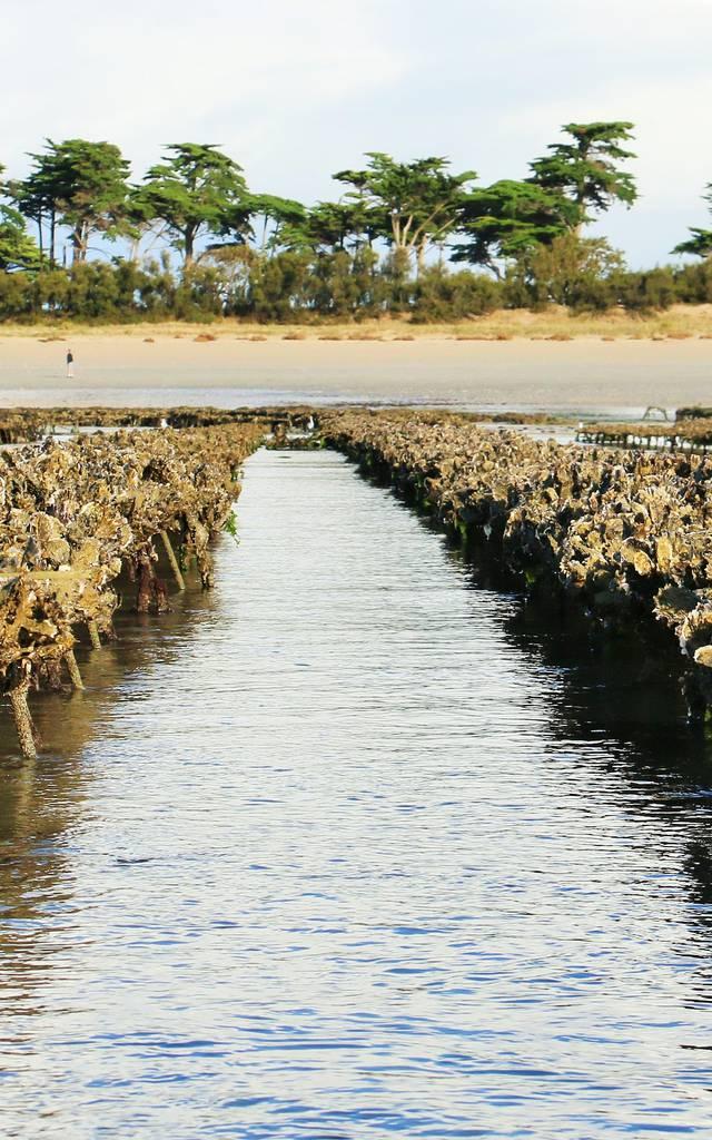 Parc à huîtres par Lesley Williamson
