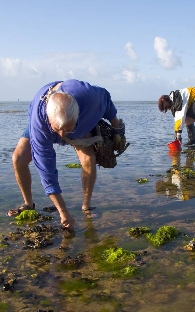 L'Ile de Ré au fil des marées