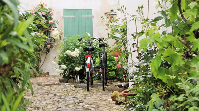Location de vélos à Saint-Martin-de-Ré par Lesley Williamson