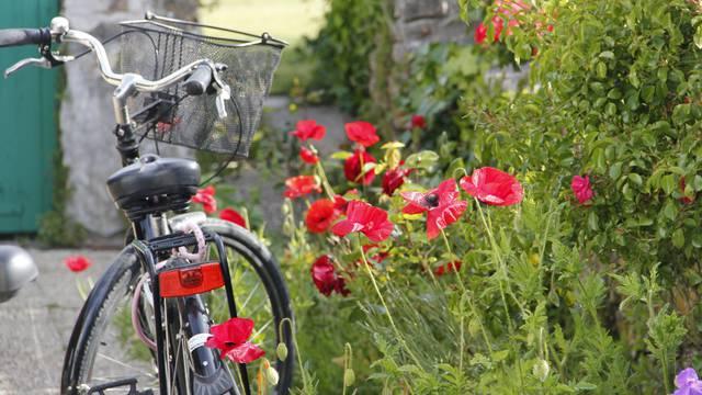 Les balades à vélo à Sainte-Marie-de-Ré