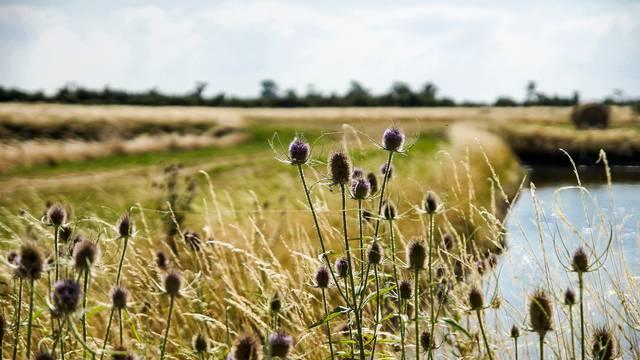 Marais Ile de Ré