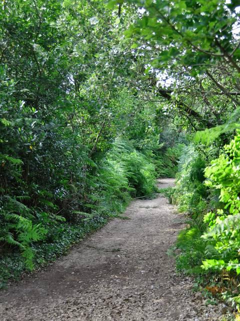 La forêt au Bois-Plage en Ré par Bernard Collin