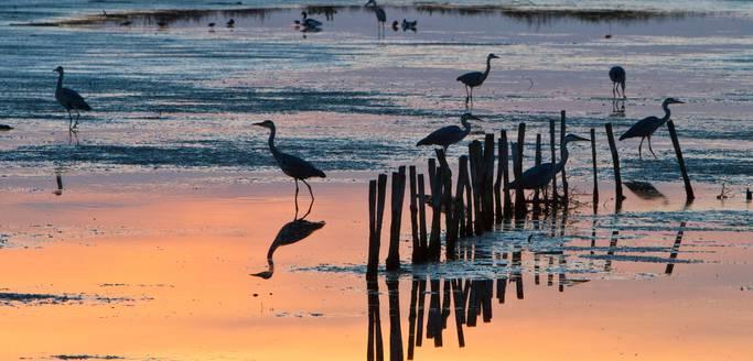Oiseaux sur la plage, réserve naturelle, par François Blanchard