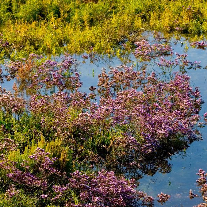 Les fleurs sauvages par François Blanchard
