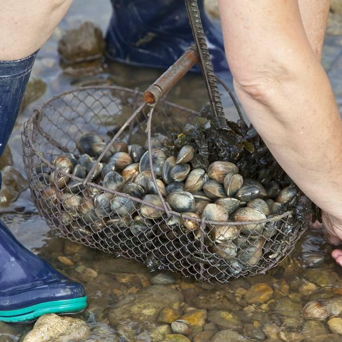 Pêche à pied ©François Blanchard