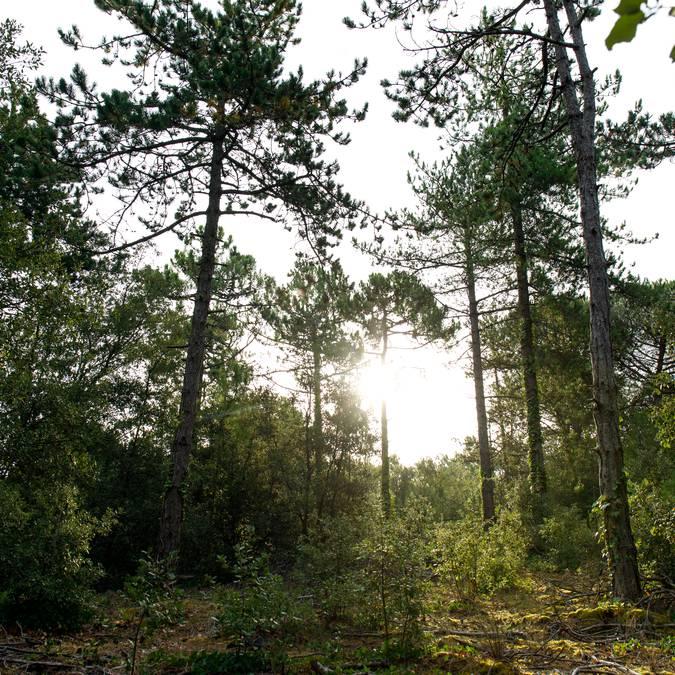 Forêt, Ile de Ré, ©Mathieu Genon