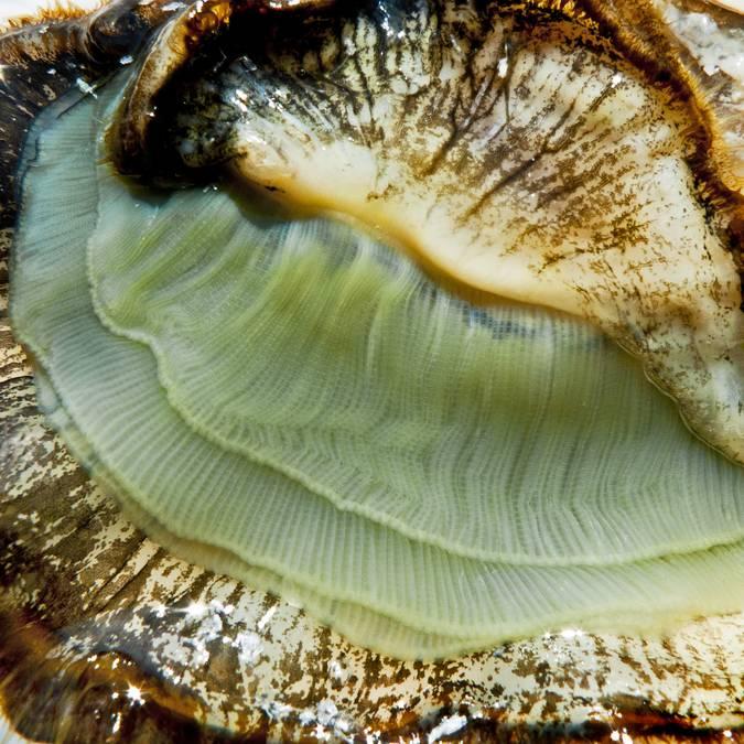 Les huîtres de l'Ile de Ré, ©François Blanchard