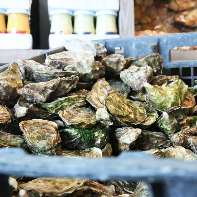 Les huîtres chez les producteurs, ©Lesley Williamson