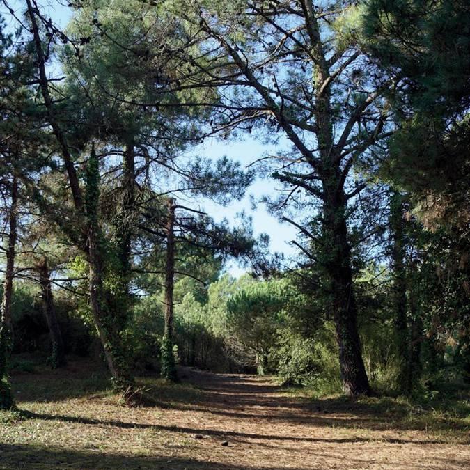 La forêt proche du camping Campiotel Les Dunes