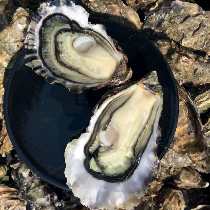 Huîtres, Ré Ostréa