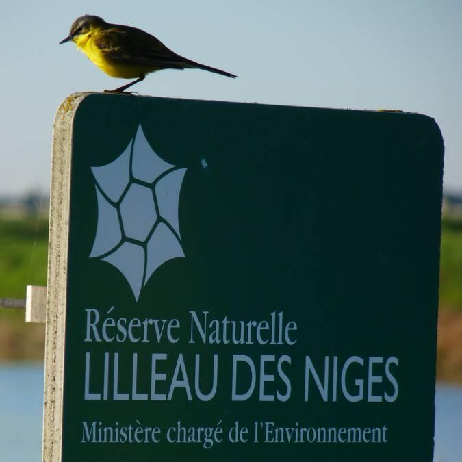 la réserve naturelle de Lilleau ©Yann Werdefroy